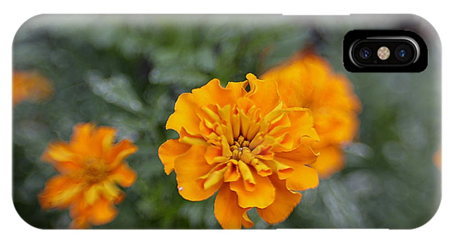 Flowers IPhone X Case featuring the photograph Aidan's Orange by Jean Macaluso