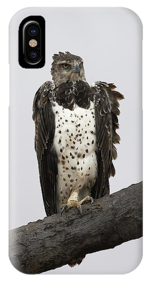 Accipitridae IPhone X Case featuring the photograph Aigle Martial Polemaetus Bellicosus by Gerard Lacz