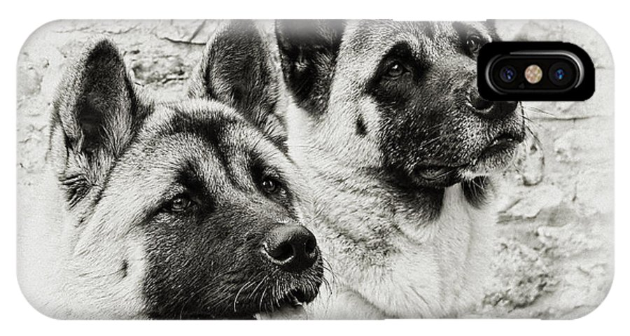 Dog IPhone X Case featuring the photograph Akitas by Susie Peek