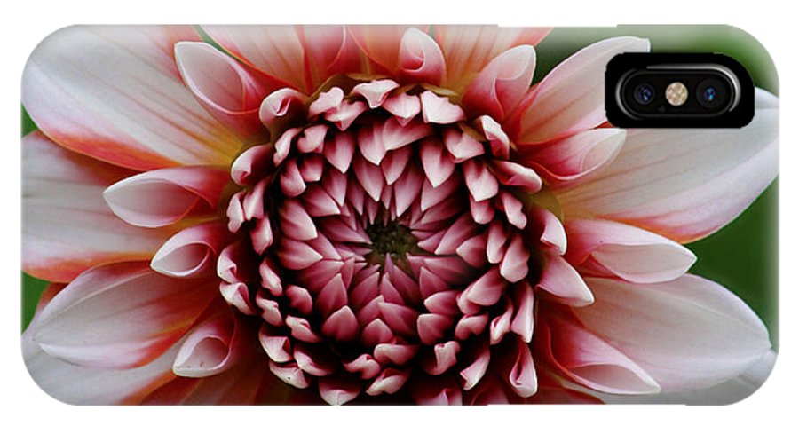 Dahlia IPhone X Case featuring the photograph Ala Mode Dahlia by Jeanette C Landstrom
