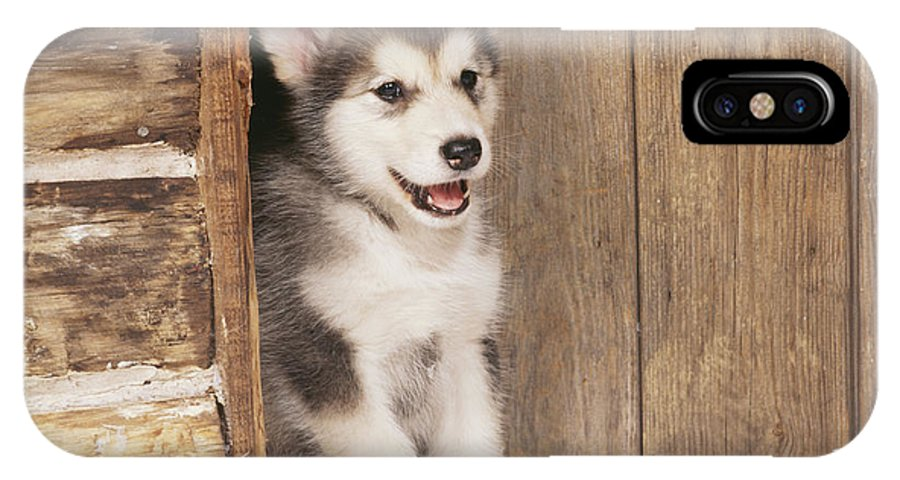 Alaskan Malamute IPhone X / XS Case featuring the photograph Alaskan Malamute Puppy by John Daniels
