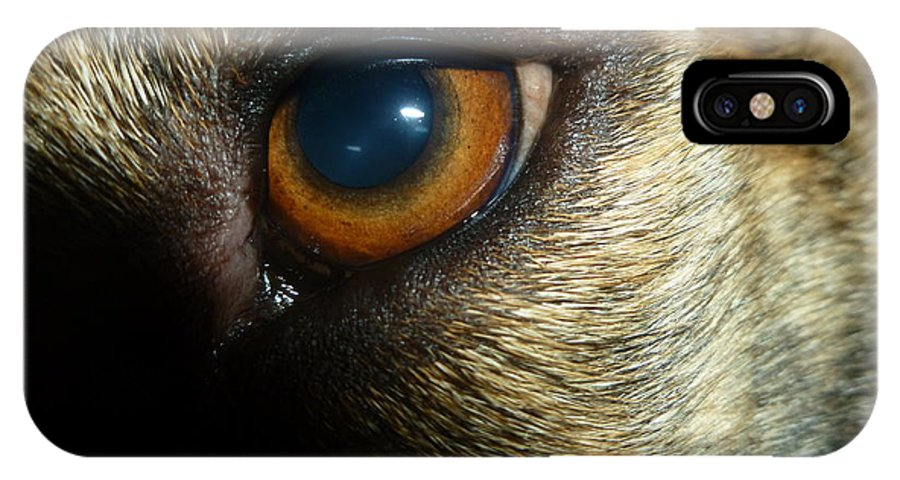 Dog IPhone X Case featuring the photograph Alert Eyes by Montana Wilson