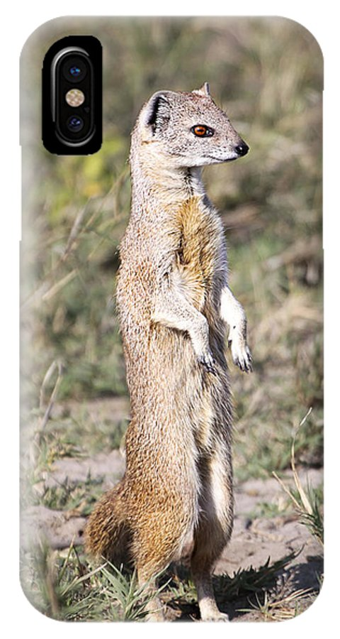Yellow Mongoose IPhone X Case featuring the photograph Alert Yellow Mongoose by Liz Leyden