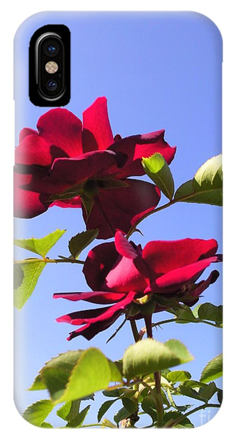 All About Roses And Blue Skies Iv Photograph Photography IPhone X Case featuring the photograph All About Roses And Blue Skies Iv by Daniel Henning