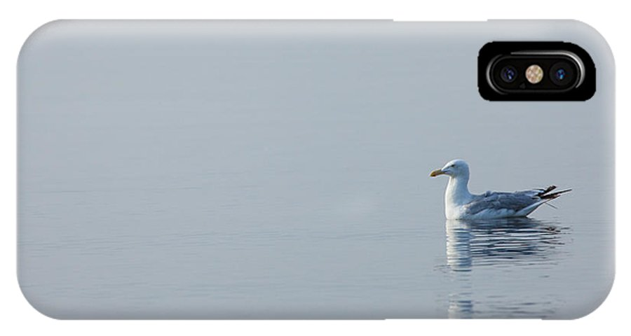 Bird IPhone X Case featuring the photograph All Alone by Karol Livote