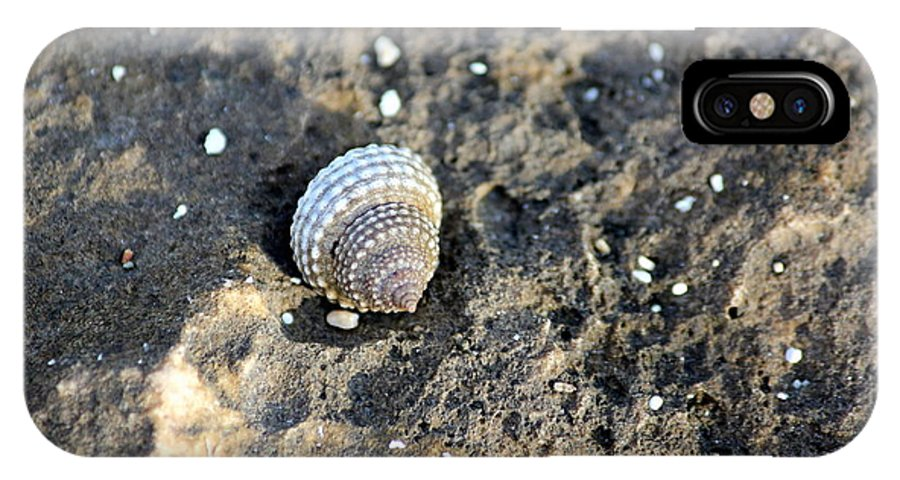 Seashell IPhone X Case featuring the photograph All By Myself by Mary Cherry