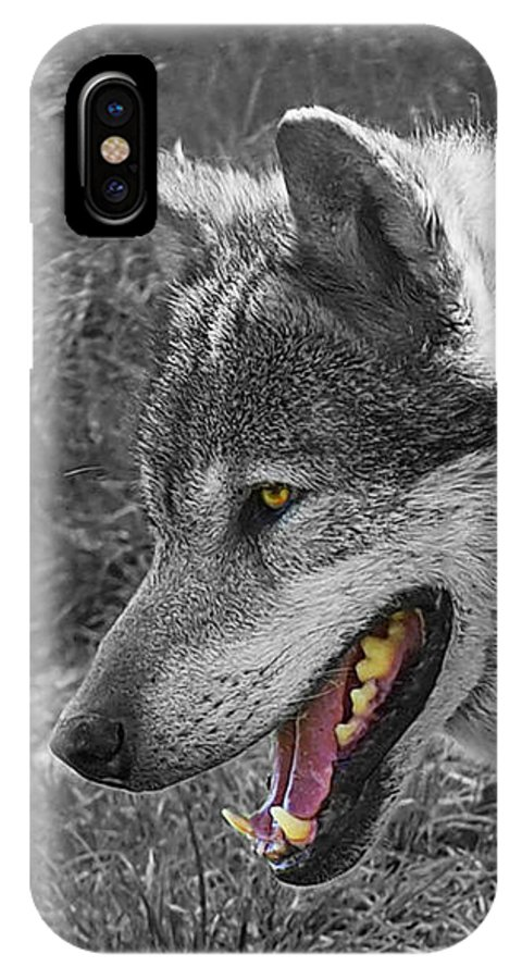Grey Wolf IPhone X / XS Case featuring the photograph Alpha Male Wolf - You Look Tasty 2 by Gill Billington