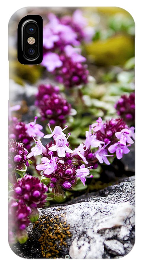 Flower IPhone X Case featuring the photograph Alpine Thyme by Katherine Hawkins