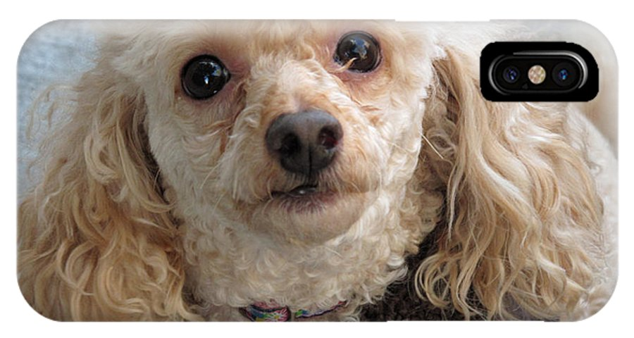 Poodle IPhone X / XS Case featuring the photograph Amanda by Barbara McDevitt