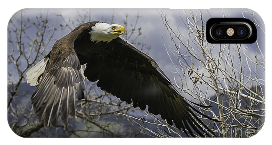 America IPhone X / XS Case featuring the photograph American Bald Eagle by Michael Goodell