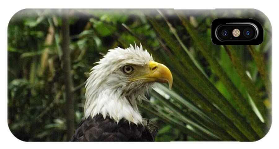 Eagle IPhone X Case featuring the photograph American Bald Eagle by Walter Rickard