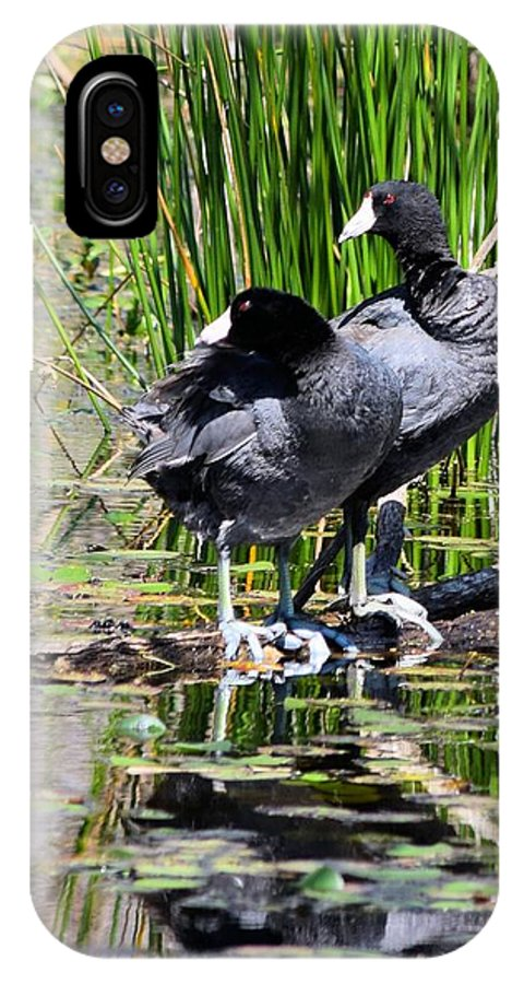 American Coot IPhone X Case featuring the photograph American Coot 1 by Sheri McLeroy