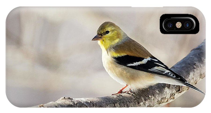 American Goldfinch IPhone X Case featuring the photograph American Goldfinch by Bill Wakeley