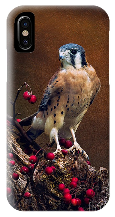 American Kestrel Photos IPhone X Case featuring the photograph American Kestrel II by Todd Bielby