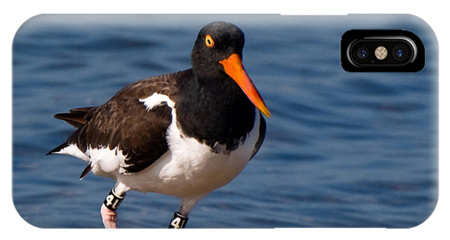 Fishing IPhone X Case featuring the photograph American Oystercatcher by Ginger Wakem