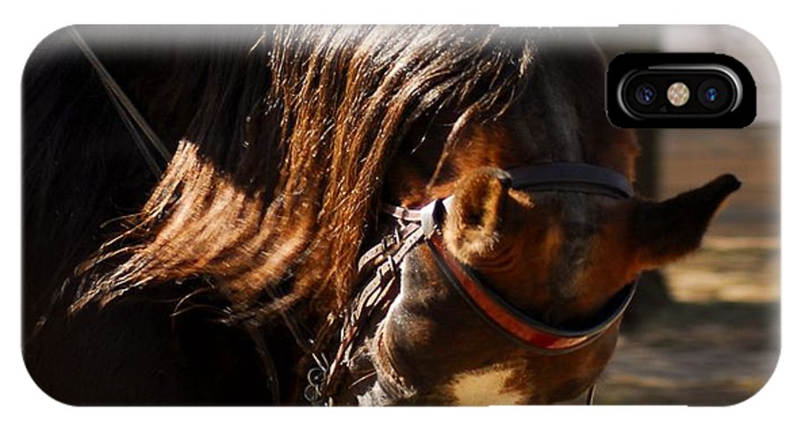 Horse IPhone X Case featuring the photograph American Saddlebred 3 by Cheryl Poland