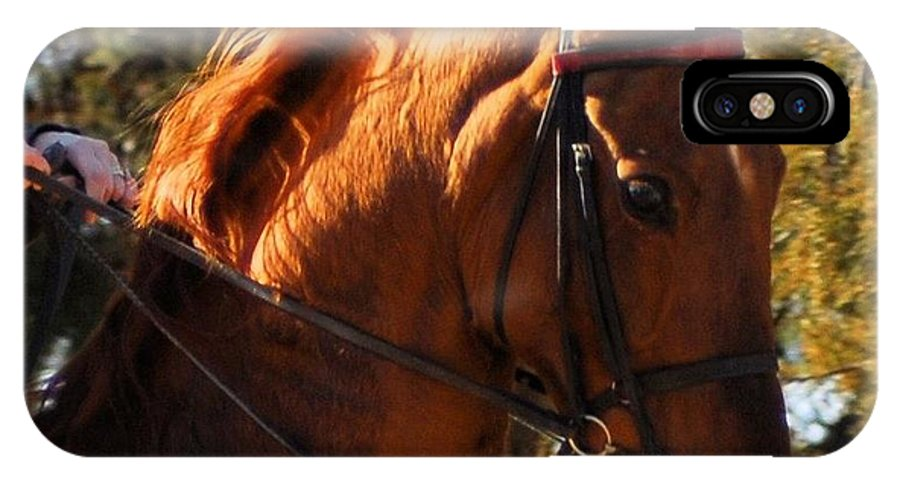 Horse IPhone X Case featuring the photograph American Saddlebred 4 by Cheryl Poland