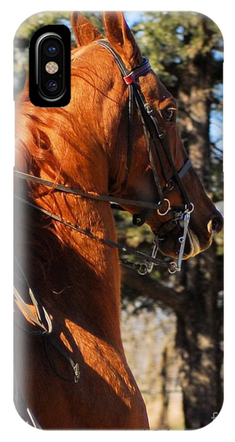 Horse IPhone X Case featuring the photograph American Saddlebred Horse Head Shot by Cheryl Poland