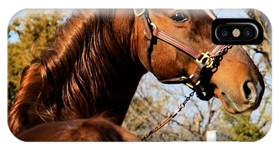 American Saddlebred Photo IPhone X Case featuring the photograph American Saddlebred Stallion by Cheryl Poland