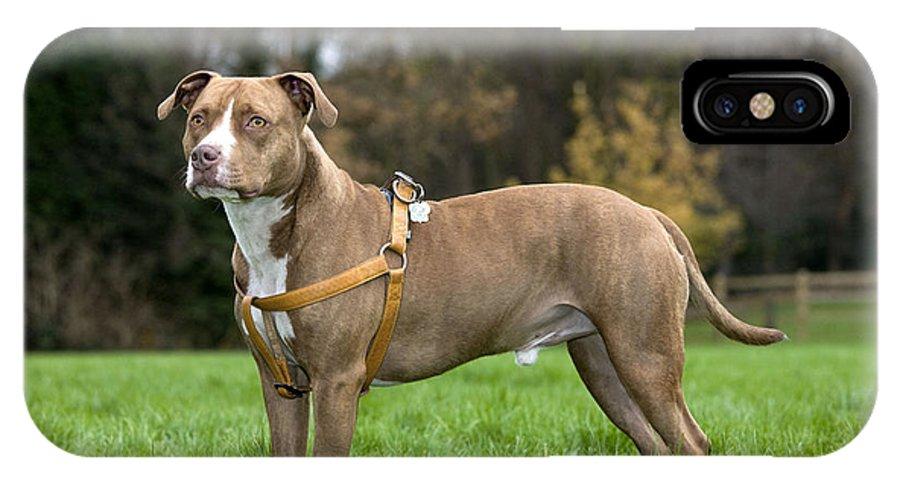 American Staffordshire Terrier IPhone X / XS Case featuring the photograph American Staffordshire Terrier by Johan De Meester