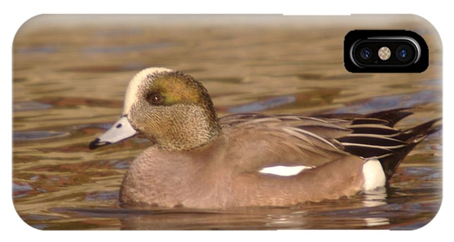 Ducks IPhone X Case featuring the photograph American Wigeon by Jeff Swan