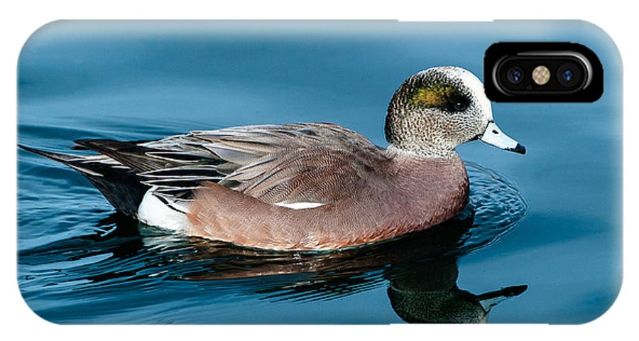American Wigeon IPhone X Case featuring the photograph American Wigeon by Stephen Johnson