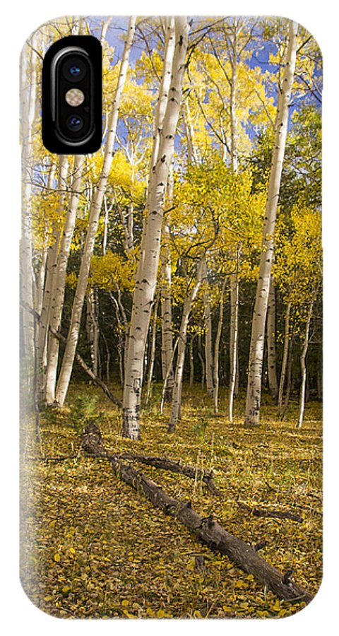 Arizona Photograph IPhone X Case featuring the photograph Amid The Aspens by Focus On Nature Photography