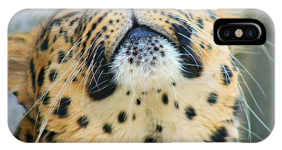 Leopard Whiskers IPhone X Case featuring the photograph Amure Leopard by Amanda Stadther