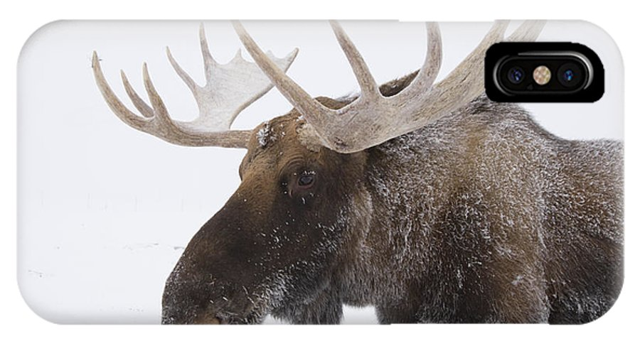 Winter IPhone X Case featuring the photograph An Elk Cervus Canadensis With Snow by Doug Lindstrand