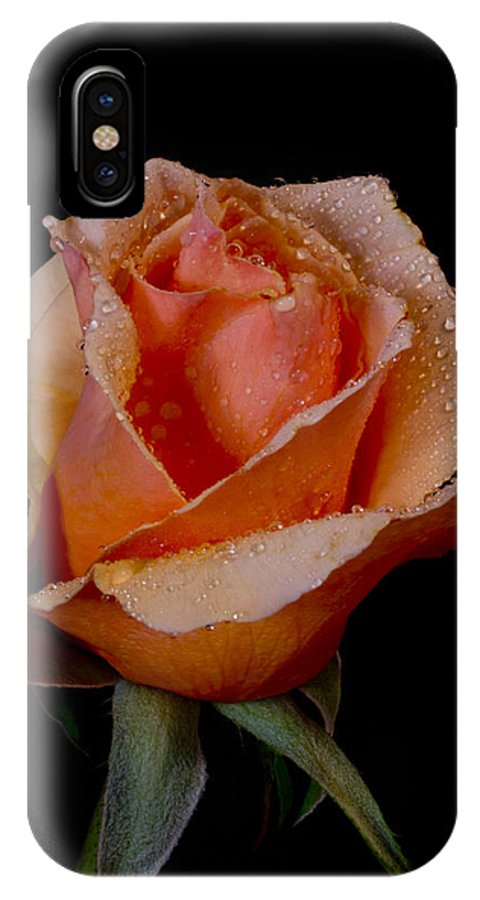 Rose IPhone X Case featuring the photograph An Orange Rose by Fred Ziegler