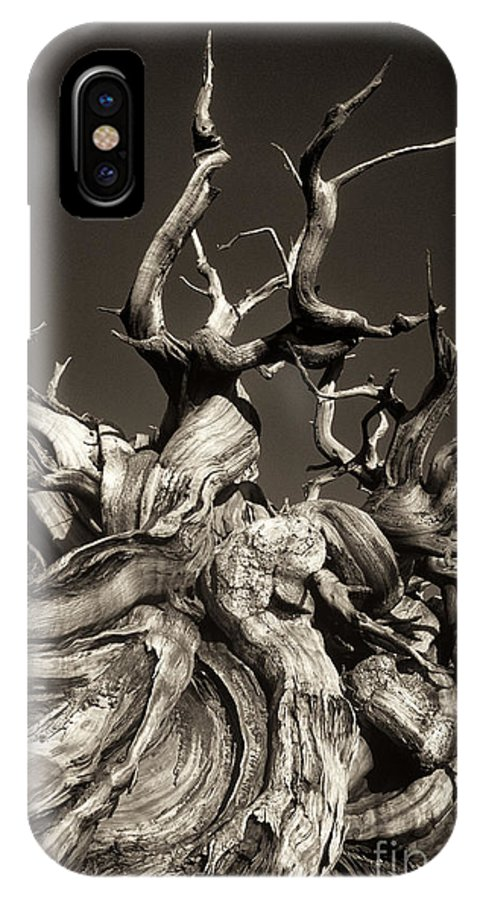 American IPhone X Case featuring the photograph Ancient Bristlecone Pine In Black And White by Dave Welling