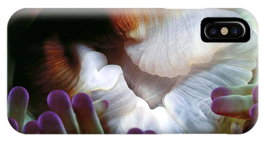 Micronesia IPhone X Case featuring the photograph Anenomes 2 by Dawn Eshelman