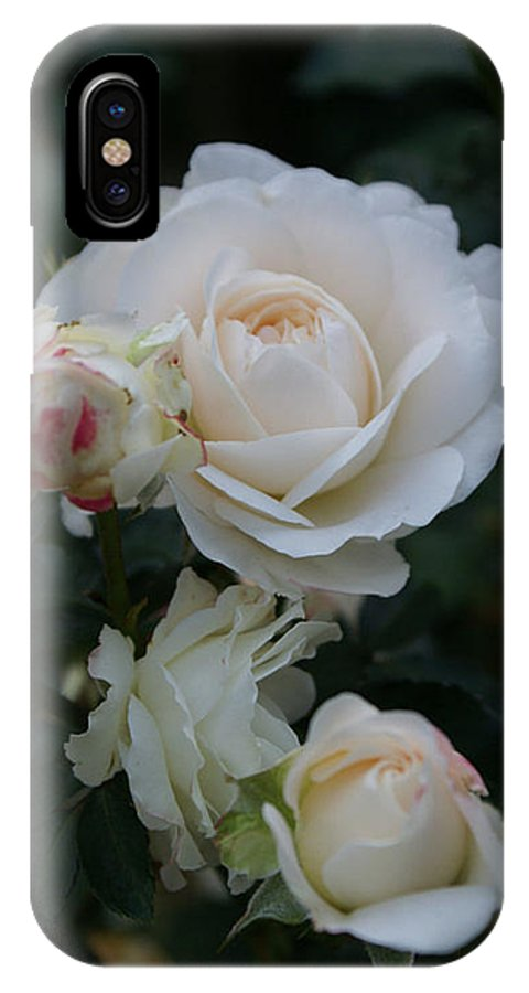 White Rose Buds IPhone X Case featuring the photograph Angel Kiss II by Jacqueline Russell