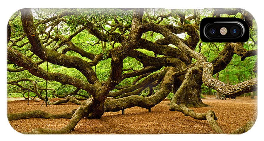 Nature IPhone X Case featuring the photograph Angel Oak Tree Branches by Louis Dallara