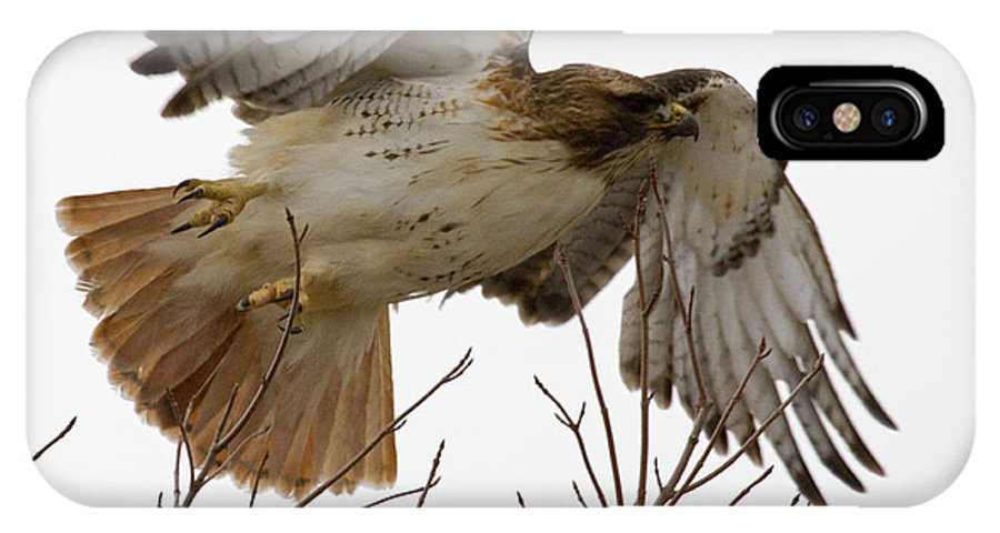 Red-tailed Hawk IPhone X / XS Case featuring the photograph Angel Wings by Eric Mace