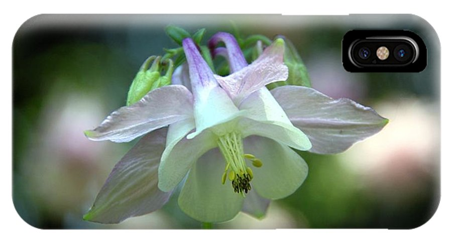 Columbine IPhone X Case featuring the photograph Angelic Aquilegia by Andrea Lazar