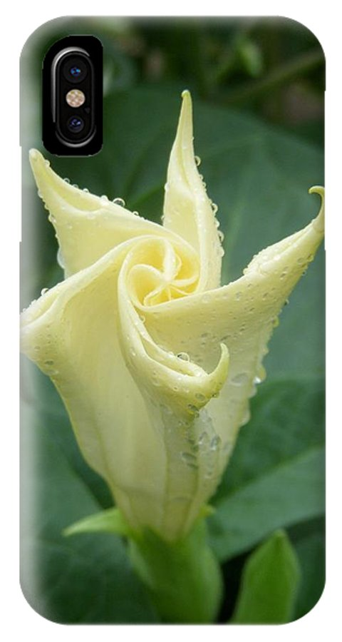 Angel's Trumpet IPhone X Case featuring the photograph Angel's Trumpet by Terri Waselchuk