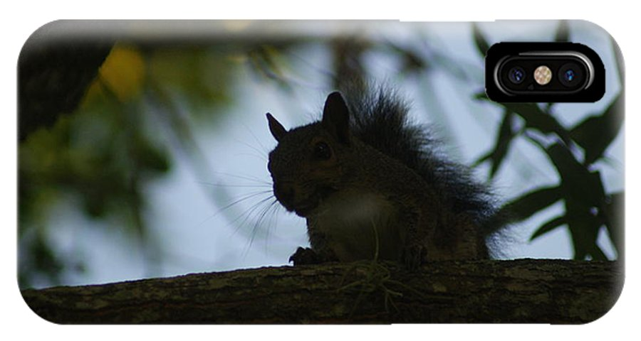 Squirrels IPhone X Case featuring the photograph Angry Squirrel by Johnny Mcdonald