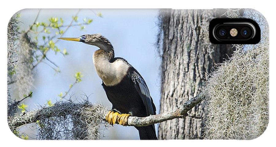 IPhone X Case featuring the photograph Anhinga And Spanish Moss by TJ Baccari