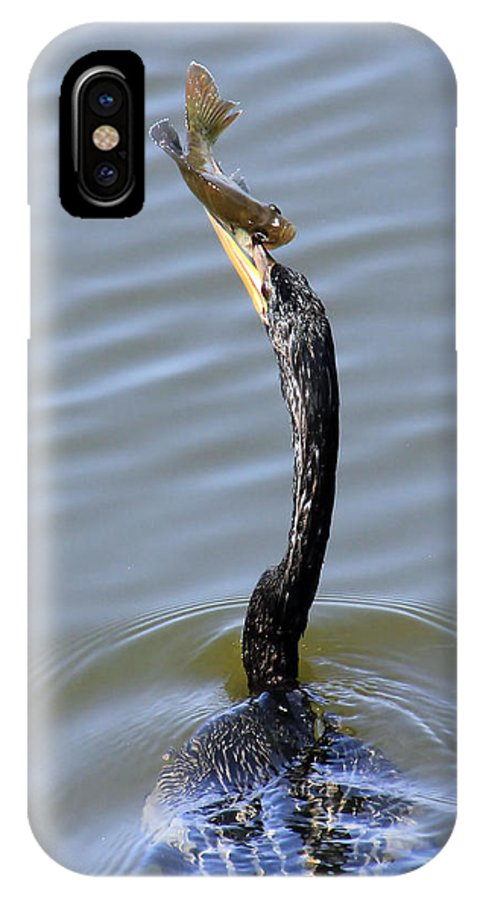 Bird IPhone X Case featuring the photograph Anhinga Catch by Rosalie Scanlon