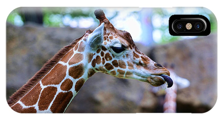 Paul Ward IPhone X Case featuring the photograph Animal - Giraffe - Sticking Out The Tounge by Paul Ward