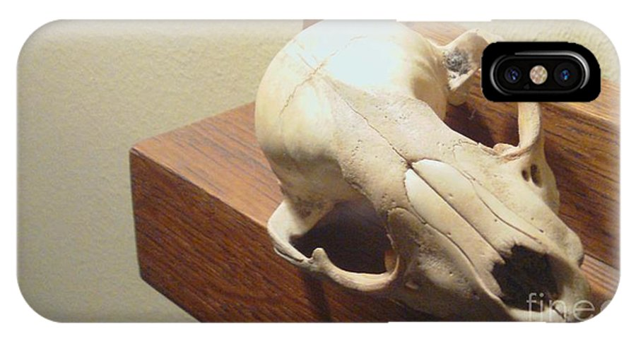 Animal Skull On Mantel IPhone X Case featuring the photograph Animal Skull Mantel 2 12 2011 by Feile Case