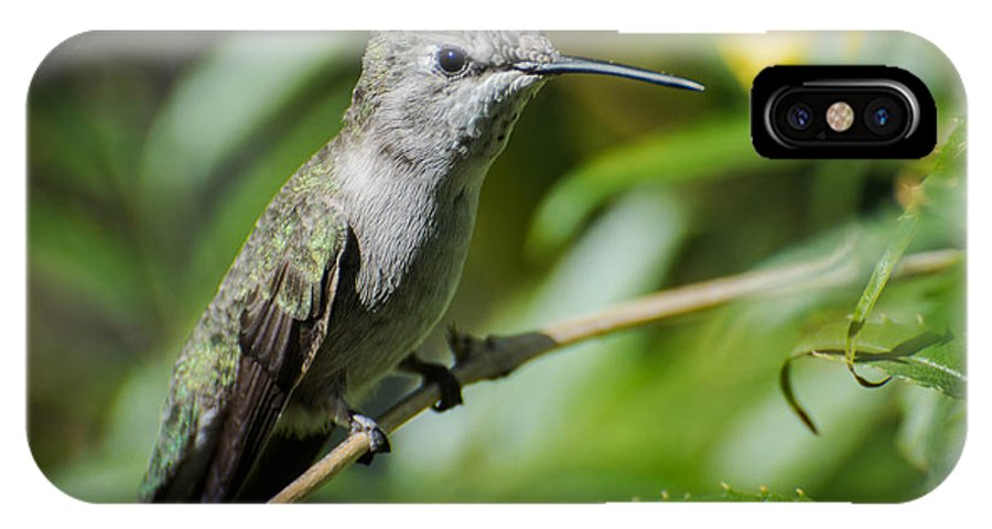 Female IPhone X Case featuring the photograph Anna Hummingbird by Michael Moriarty