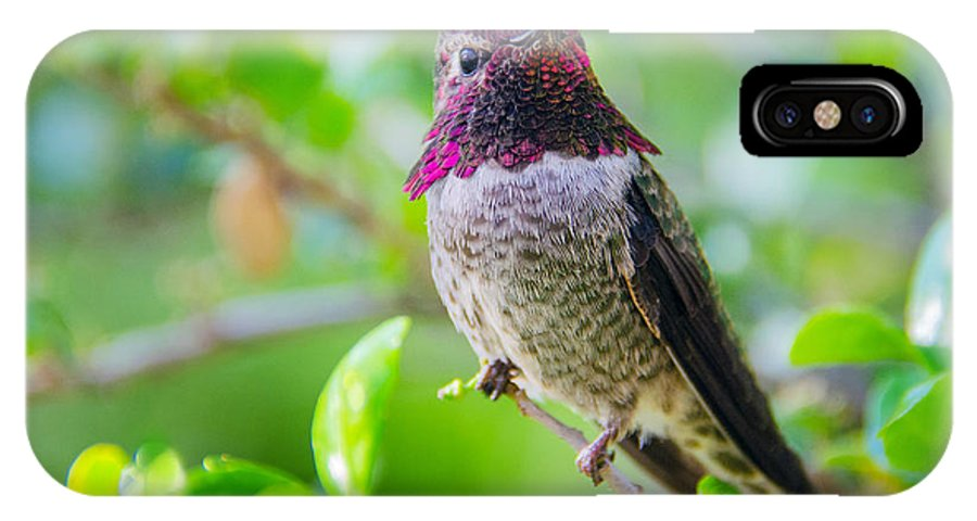 Birds IPhone X Case featuring the photograph Anna's Hummer by Barbara Manis