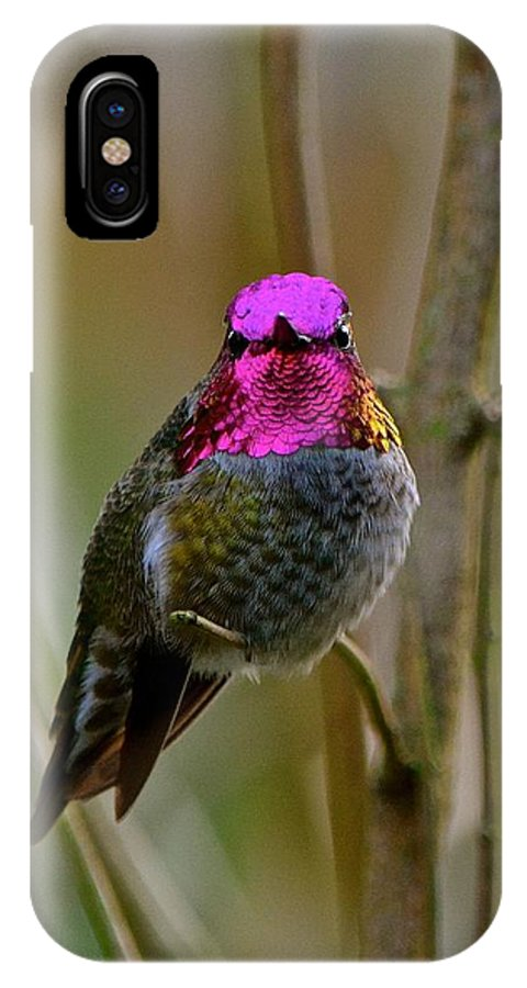Anna's Hummimgbird Photos IPhone X Case featuring the photograph Anna's Hummingbird by Lisa Telquist