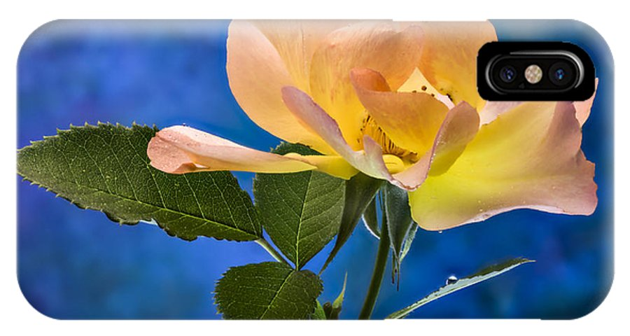 Rose IPhone X Case featuring the photograph Another Beautiful Rose by Jean Noren