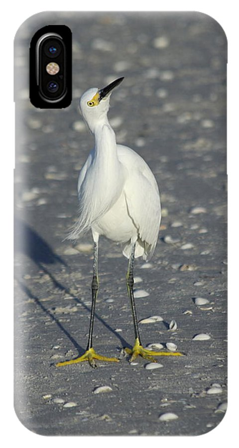 Snowy Egret IPhone X Case featuring the photograph Another Flying Fish by Christiane Schulze Art And Photography