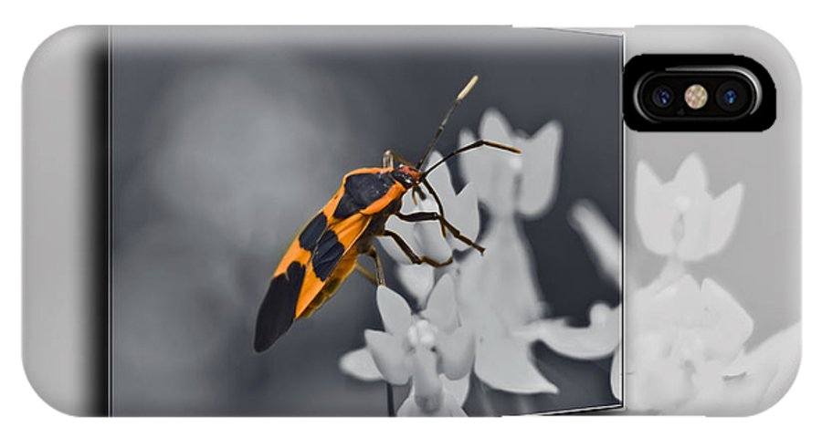 Milkweed Bug IPhone X Case featuring the photograph Another World by Carolyn Marshall