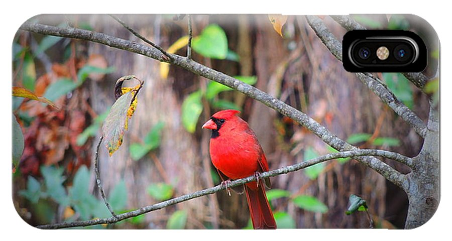 Phil IPhone X Case featuring the photograph Appalachian Cardinal by Phil Penne