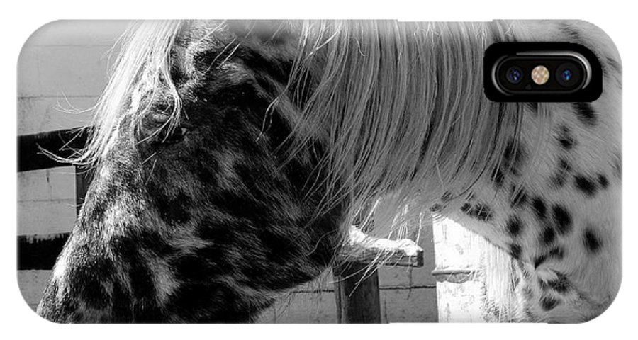 Appaloosa IPhone X Case featuring the photograph Appaloosa 1 by Kathy Barney